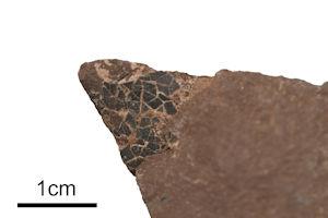 小型獣脚類恐竜もしくは鳥類の卵殻化石(左下バーが1cm)