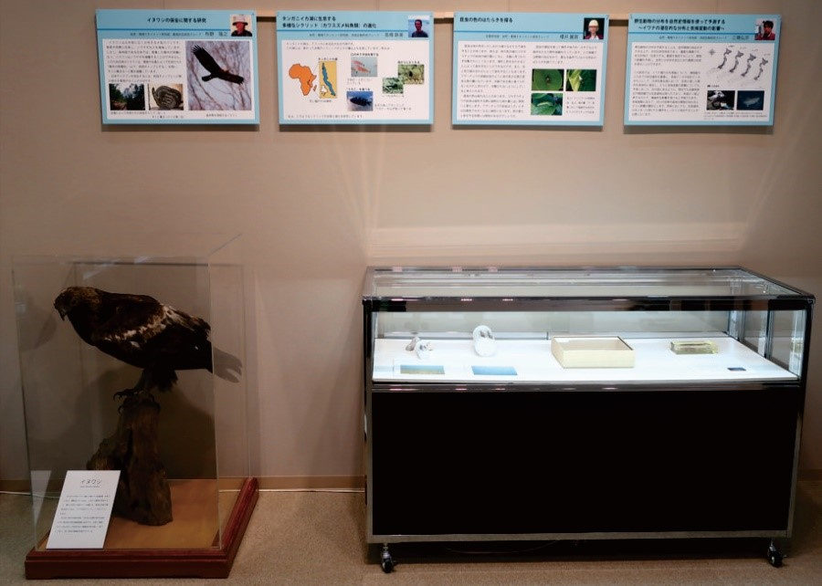 昨年度の研究員展2019の一例:パネル展示とイヌワシはく製など研究・普及教育用の資料